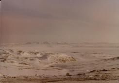 Arctic Circle + wolf